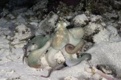 C0721_Octopus_AP9A8629