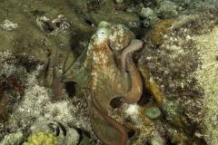 C0721_Octopus_AP9A8635