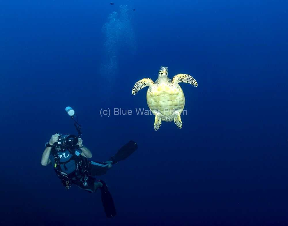 Diver and hawksbill turtle in Grand Cayman