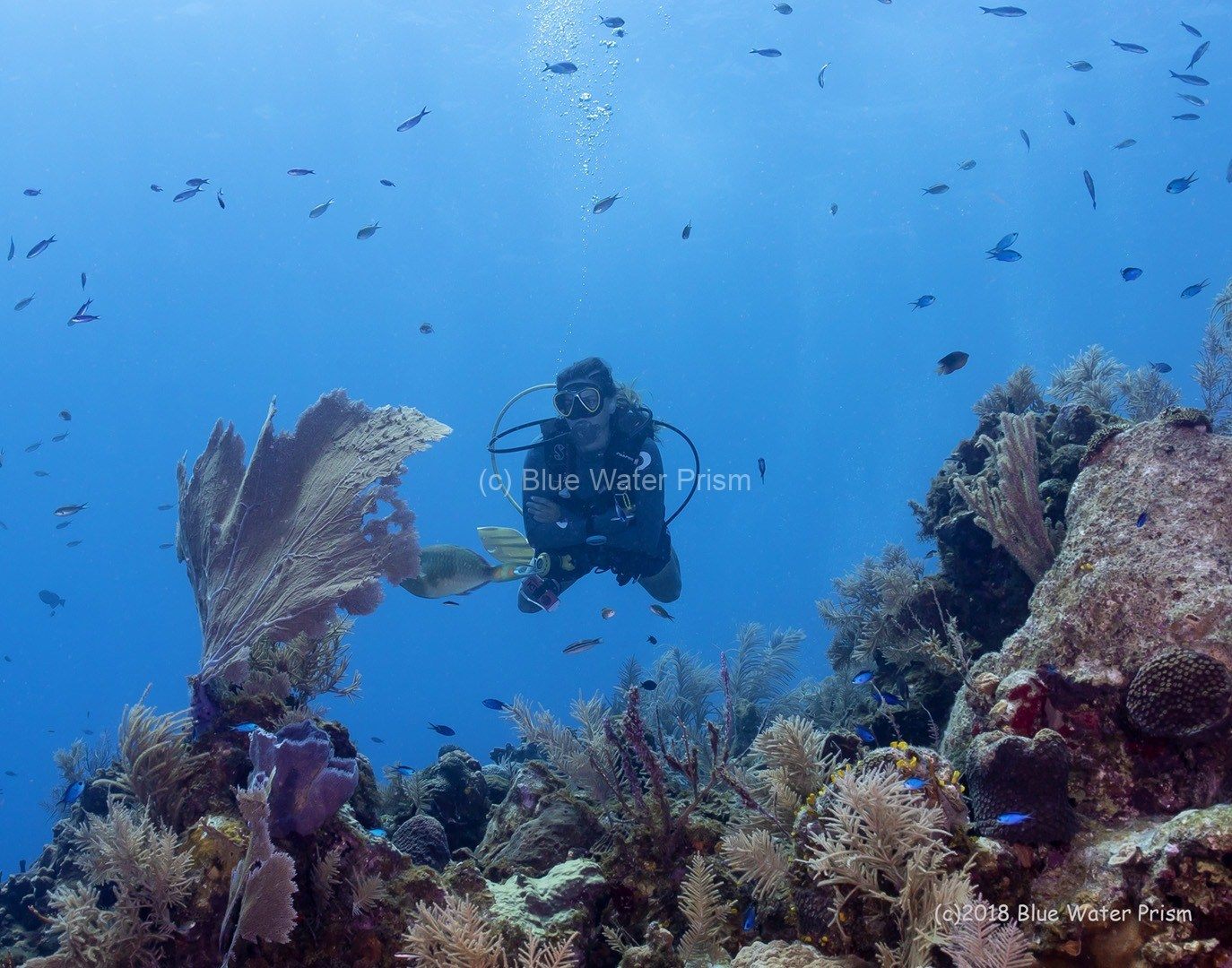 Diver on reef in Grand Cayman