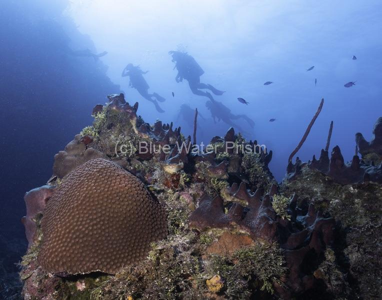 Divers on Palancar Gardens Cozumel
