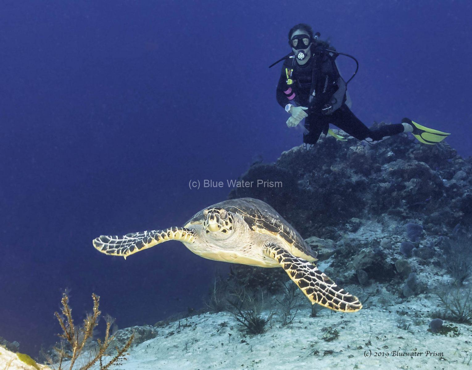 Diver and hawksbill turtle in Cozumel