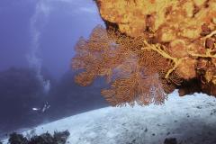 Diver on Palancar Bricks