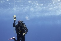 Diver and jellyfish in Cozumel