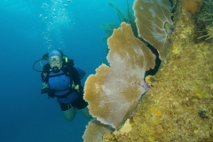 Diver on reef in Roatan