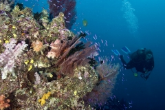 Diver on reef in Fiji