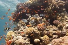 Eilat Reef scene