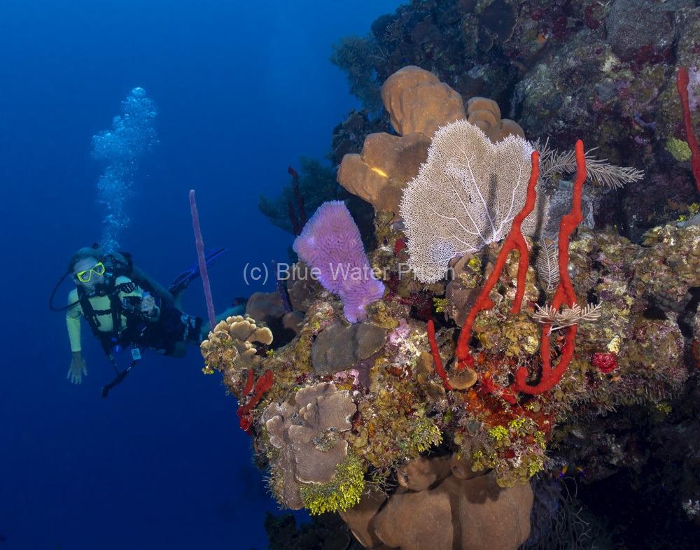 Scuba diver near a Grand Cayman Reef