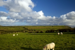 Dingle Peninsula4
