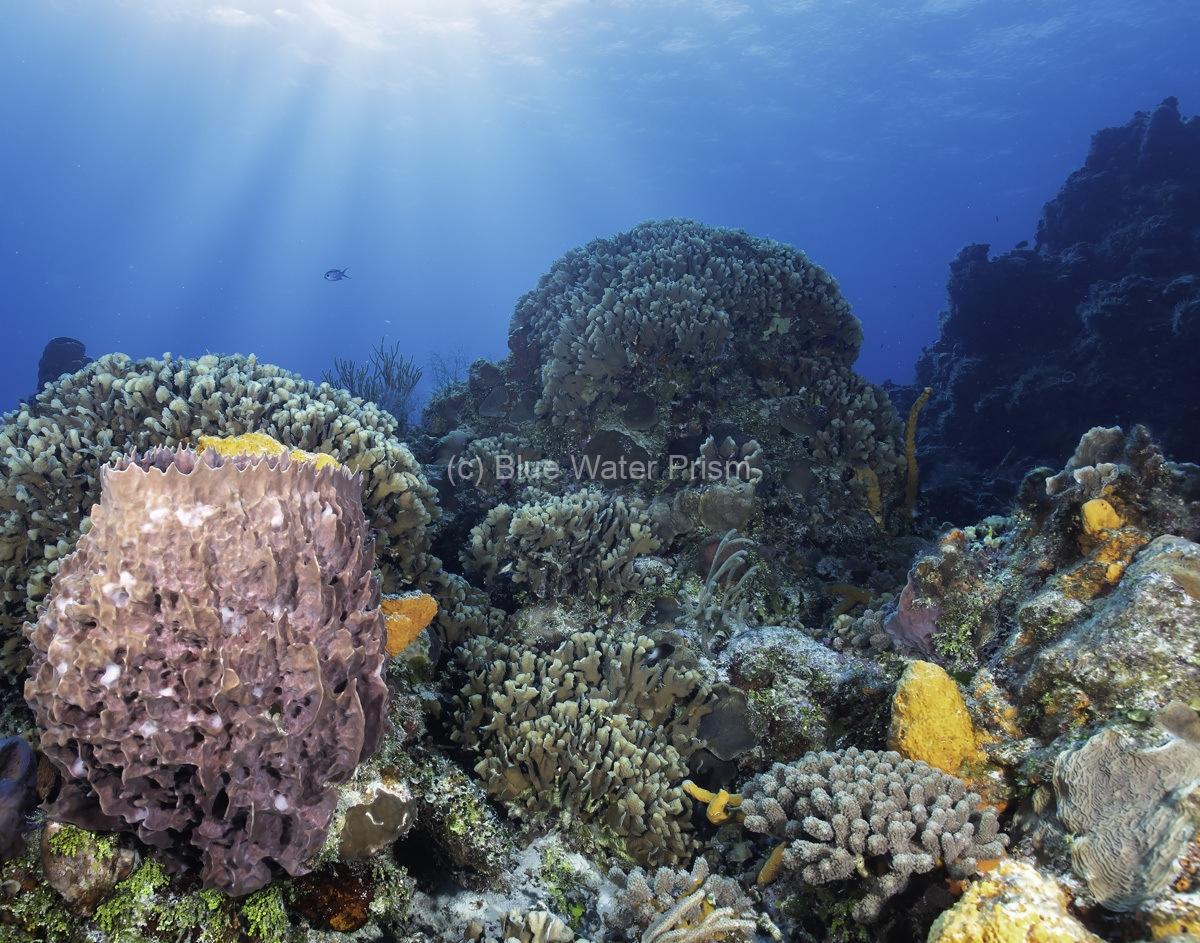 Palancar Bricks Reef Cozumel