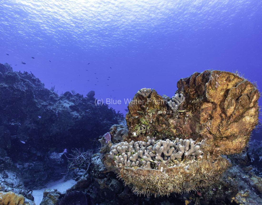 C0421_Santa-Rosa_Reef_AP9A8170