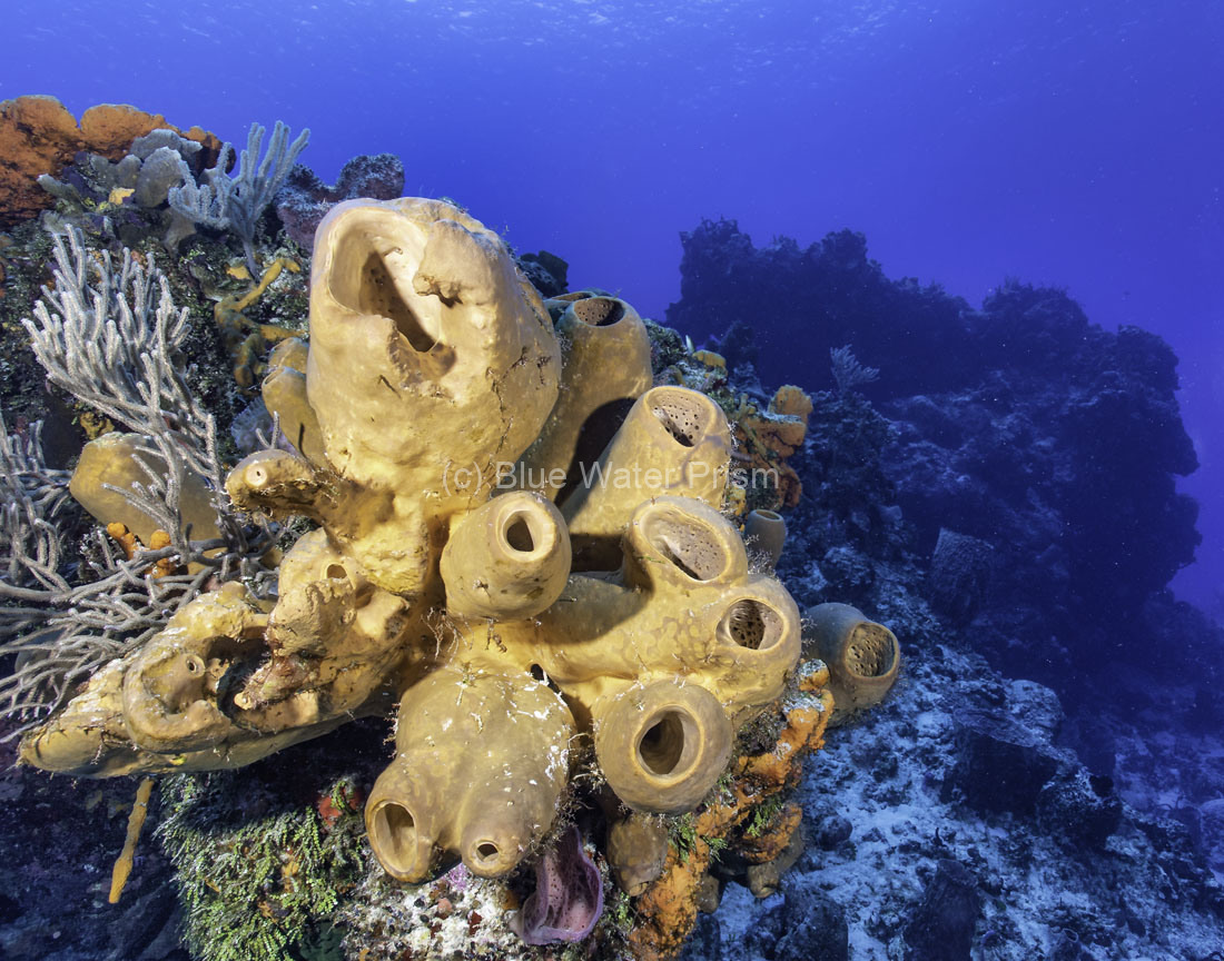 C0421_Santa-Rosa_Reef_AP9A8172