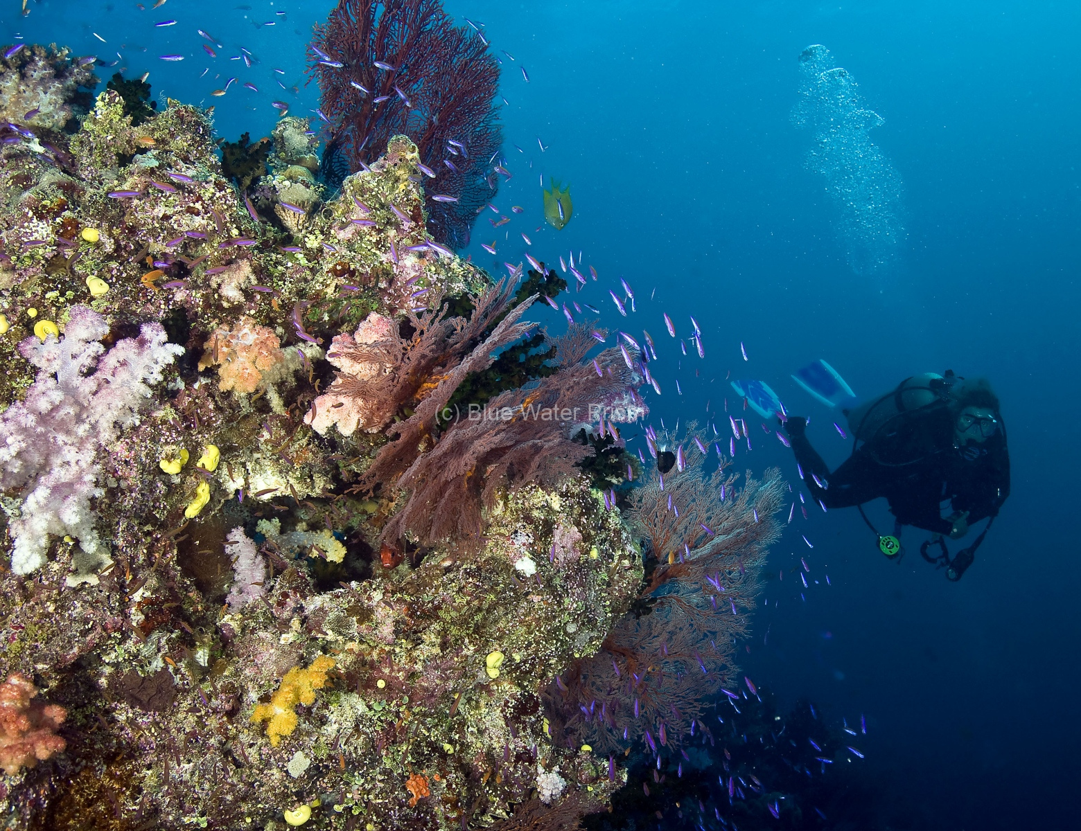 Diver on Fiji Reef