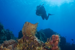 Diver on Reef in Cozumel