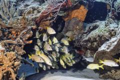 C0321_Fish-school_AP9A8028