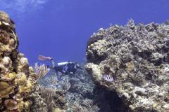 C0421_Diver-reef_AP9A8120