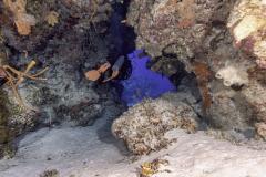 C0421_Diver-swim-through_AP9A8086