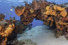 C0421_SF-Reef_AP9A8198
