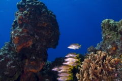 Fish Schooling on Reef in Cozumel