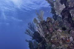 Chimneys Roatan dive site