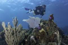 Diver on Chimneys Roatan dive site