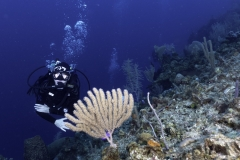Diver on First Bight Roatan dive site