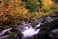 Rainforest woods waterfall