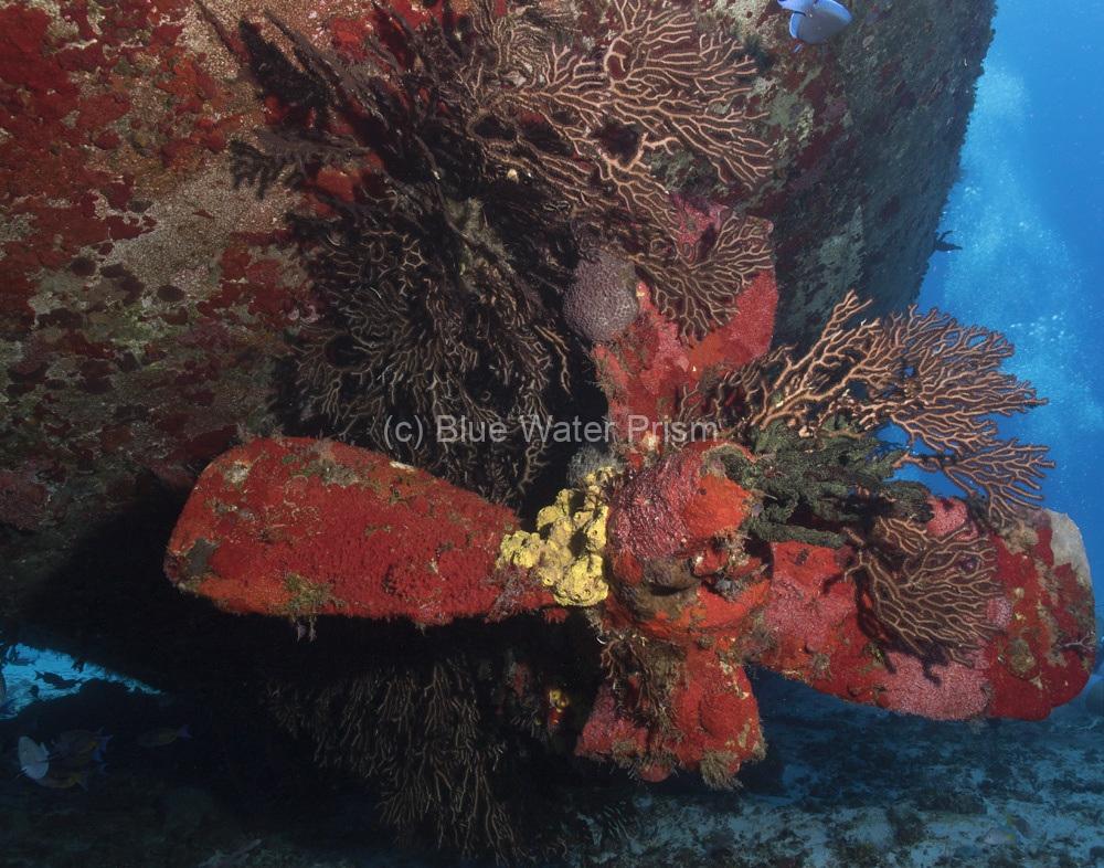 Propeller of the C53 wreck in Cozumel