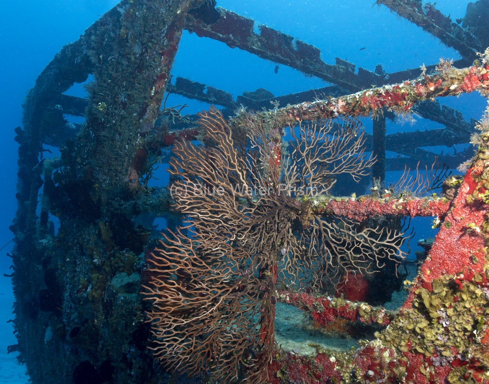 Multitude of sea life on the C53 wreck in Cozumel