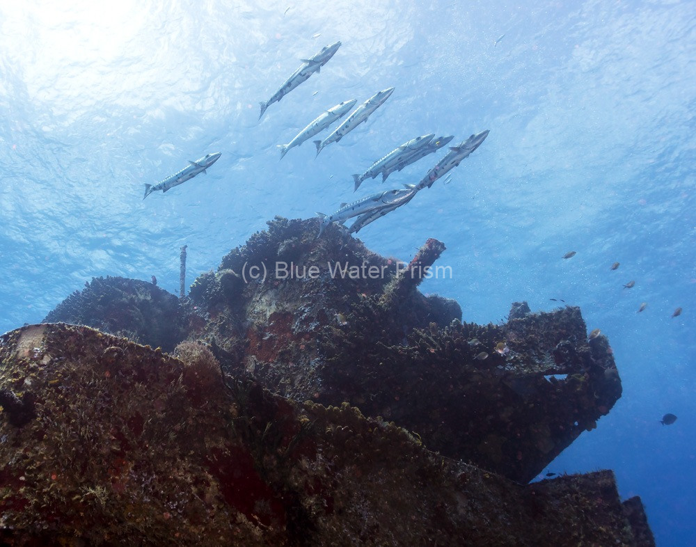 School of barracuda at the C53 wreck in Cozumel