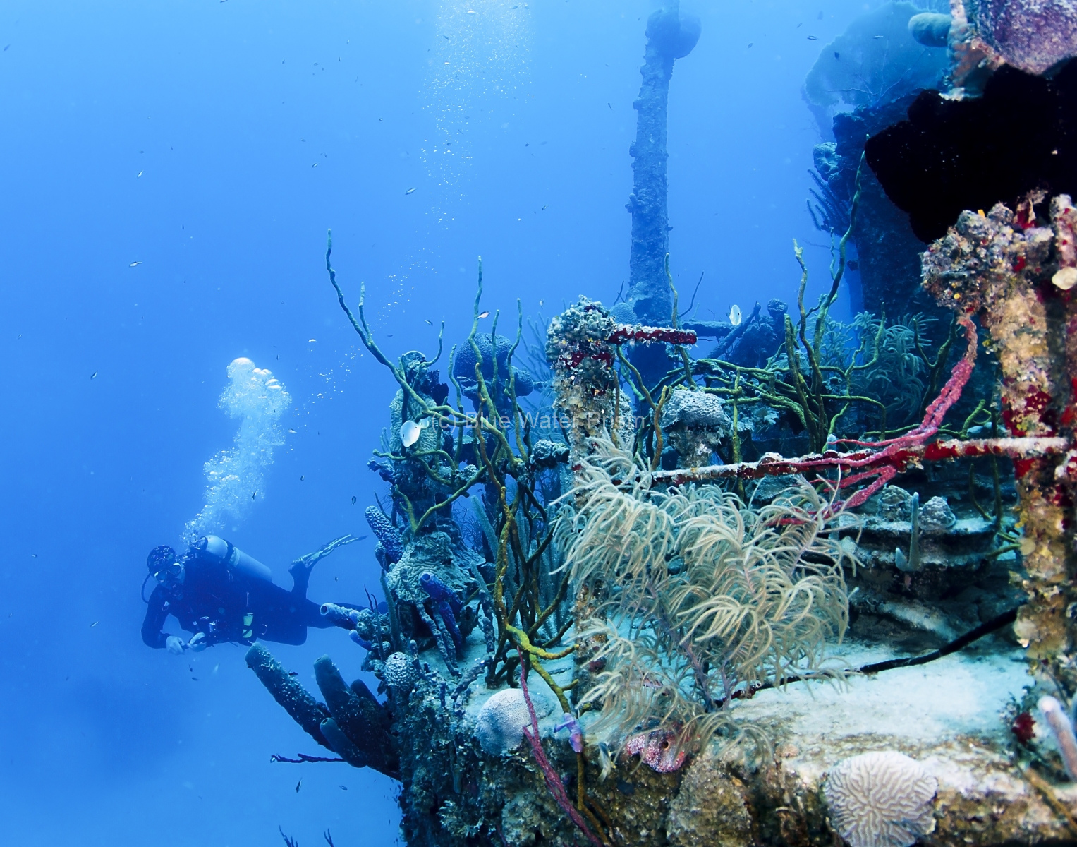 Wreck of the Prince Albert at CoCo View Roatan